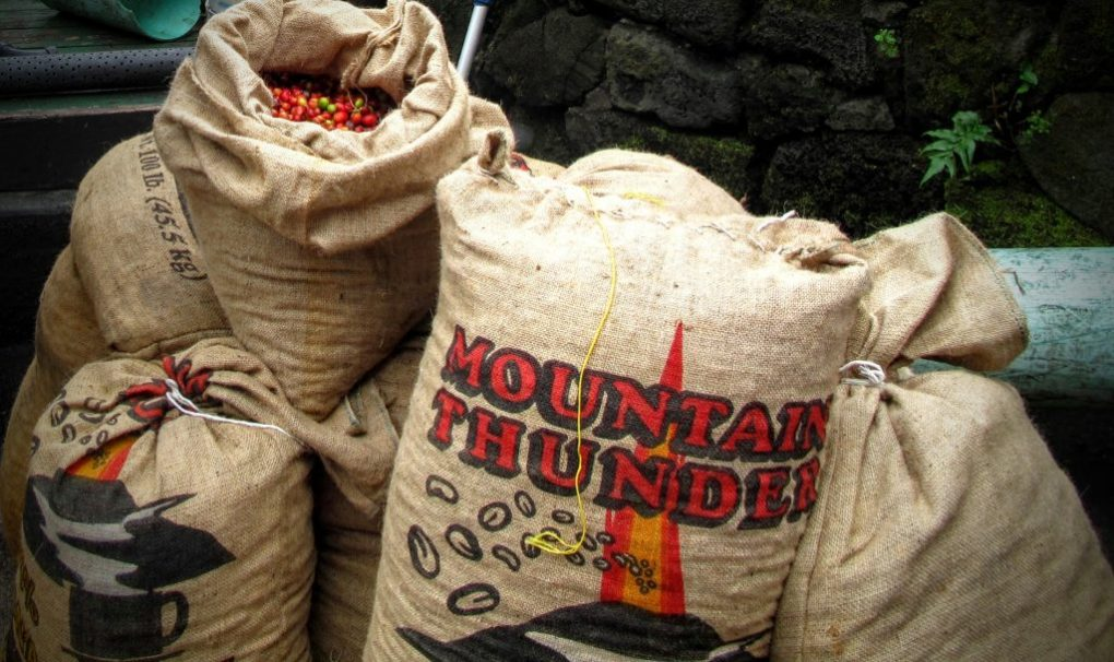 mountain thunder coffee kona