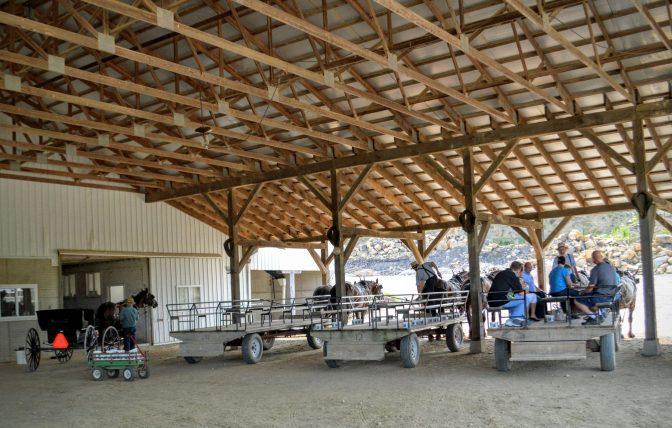 wagon loading amish zoo