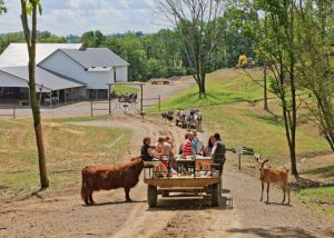 Wagon Rides Amish Zoo